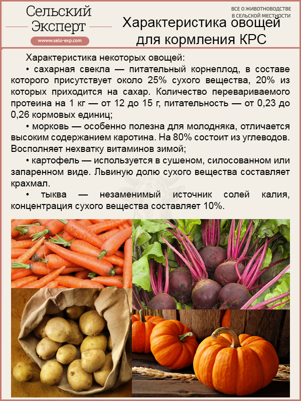 Характеристика овощей для кормления КРС